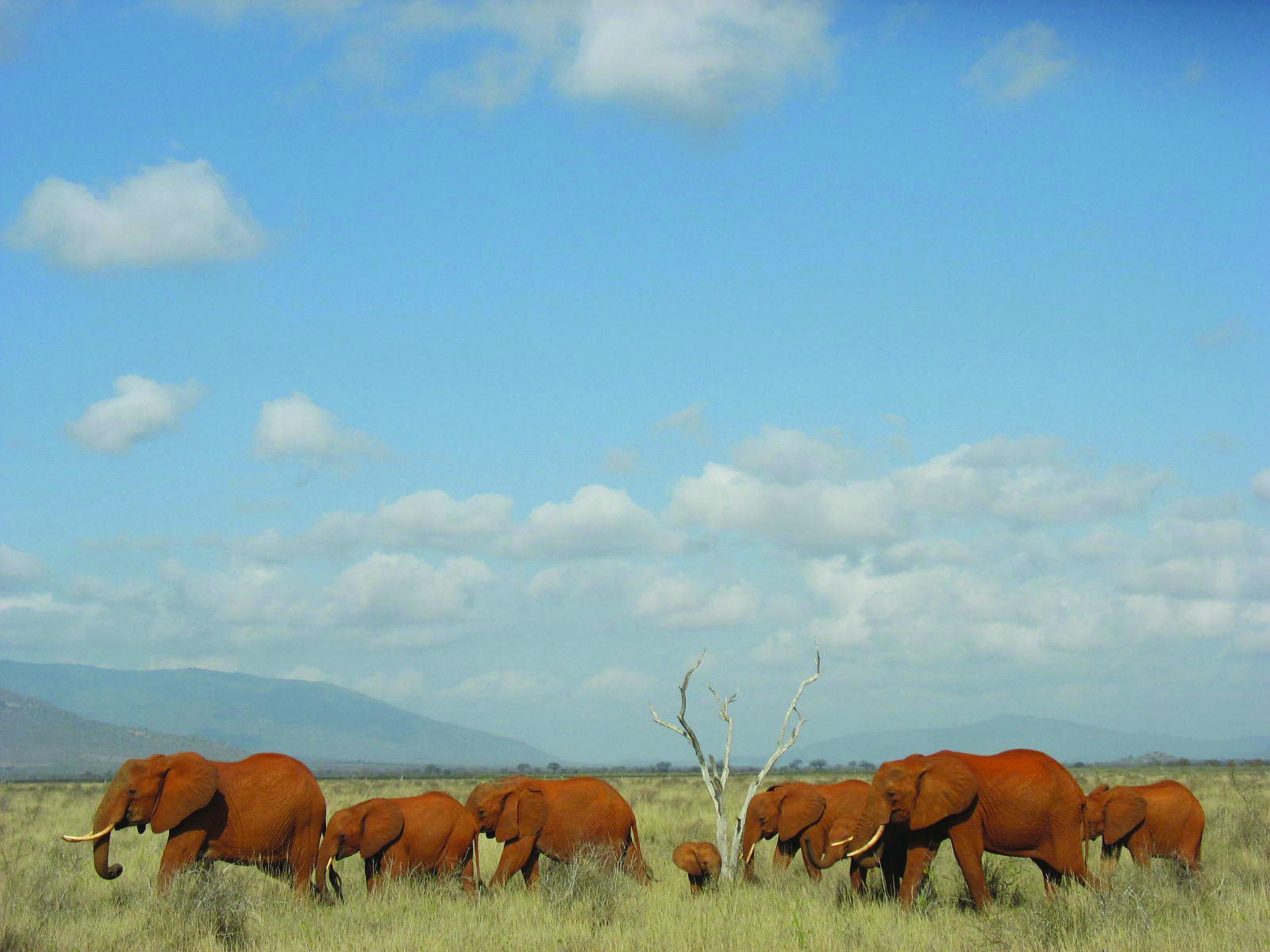 Safari Fotografico Il Piccolo Nord